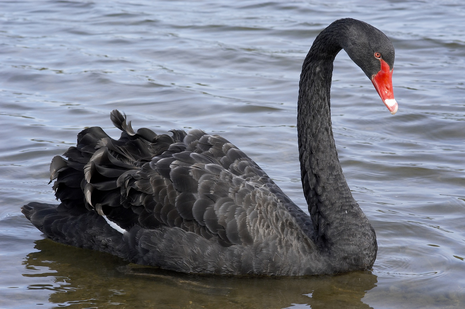 Black Swans: Frequent Once-in-a-Lifetime Crises - Lone ...